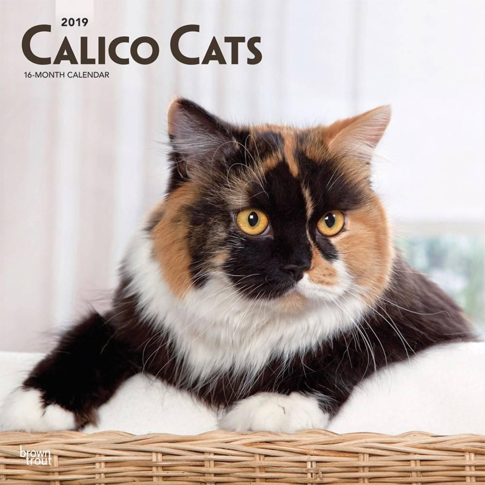 Calico Katten Kalender 2019 Browntrout