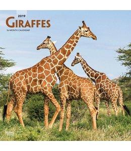 Browntrout Giraffe Kalender 2019