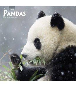 Browntrout Panda Kalender 2019
