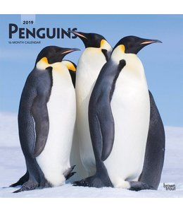 Browntrout Pinguin Kalender 2019