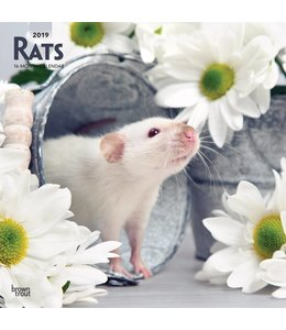 Browntrout Ratten Kalender 2019
