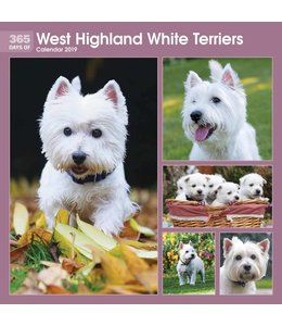 CarouselCalendars 365 Days West Highland White Terrier Kalender 2019