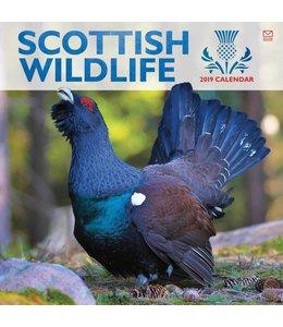 CarouselCalendars Scottish Wildlife Kalender 2019