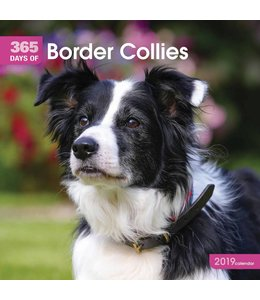 CarouselCalendars 365 Days Border Collie Kalender 2019