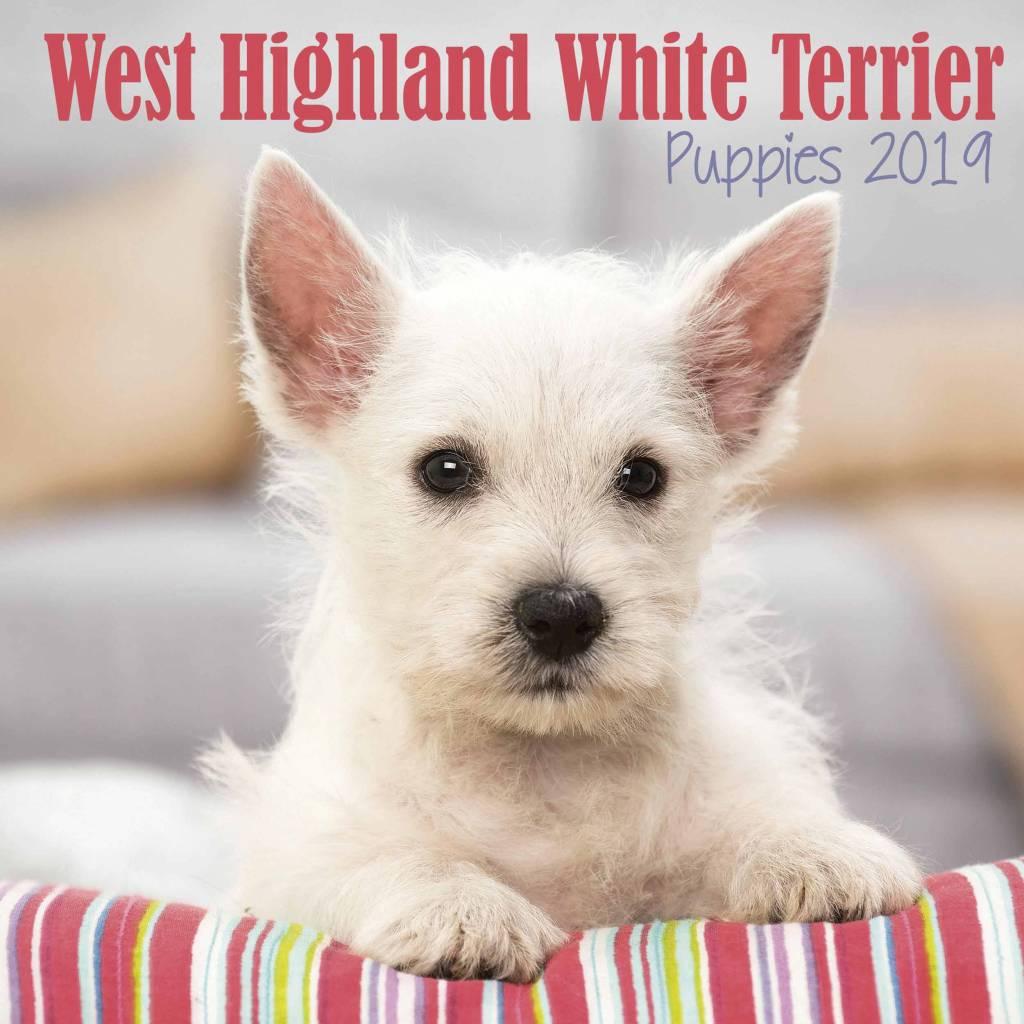 West Highland White Terrier Kalender 2019 Mini