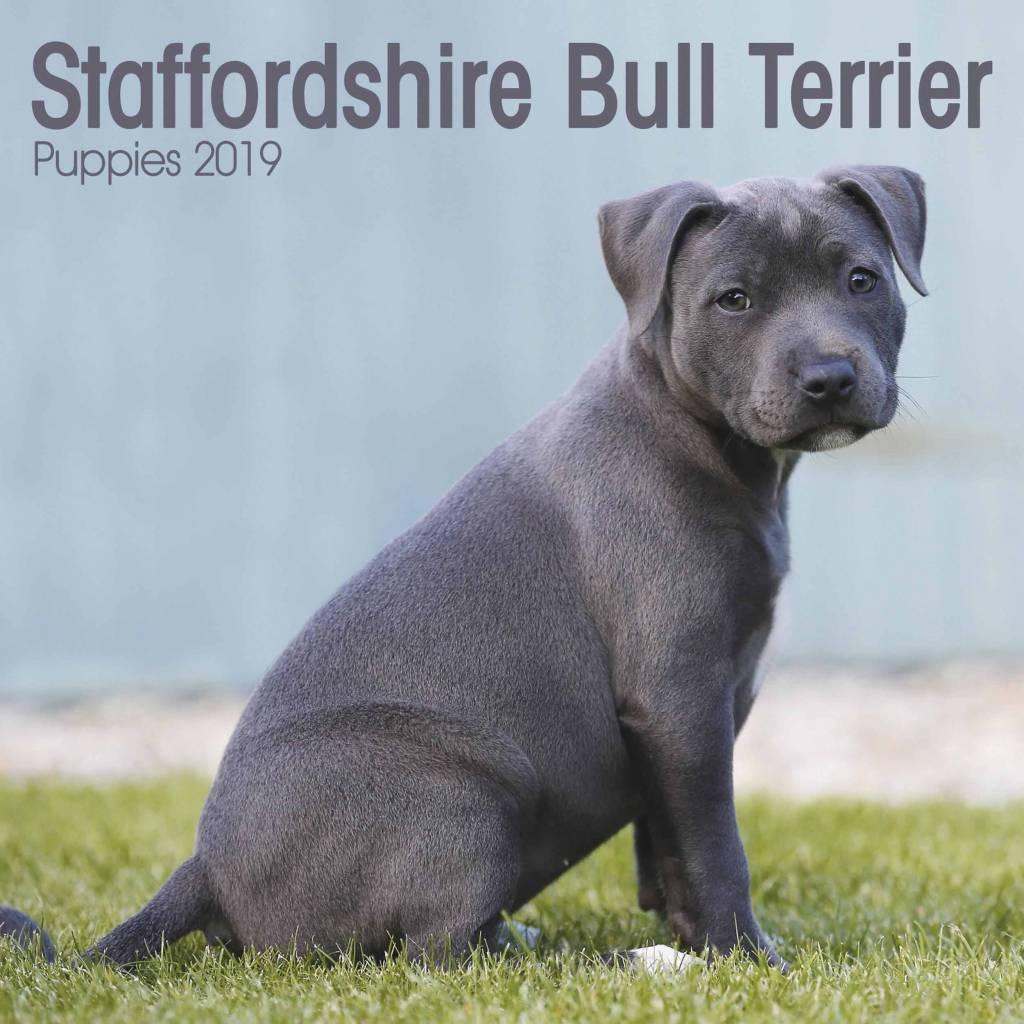 Staffordshire Bull Terrier Kalender 2019 Mini