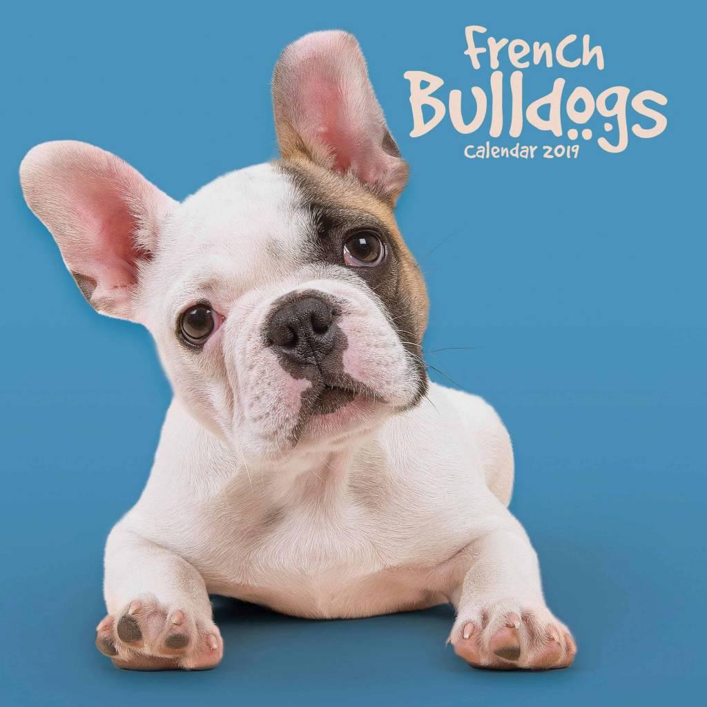 Franse Bulldog Kalender 2019 Mini