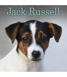 Avonside Jack Russell Terrier Kalender 2019 Mini