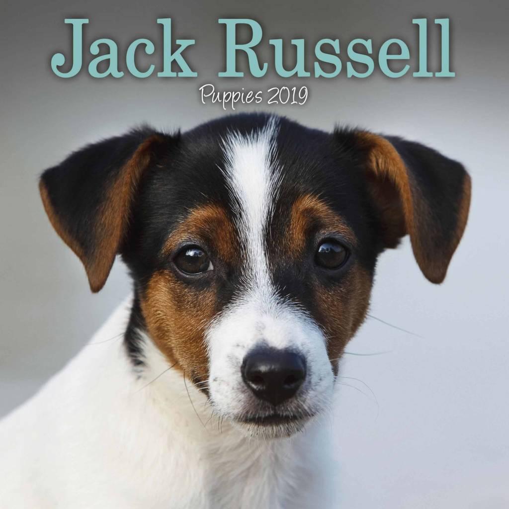 Jack Russell Terrier Kalender 2019 Mini