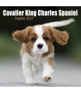 Avonside Cavalier King Charles Spaniel Kalender 2019 Mini