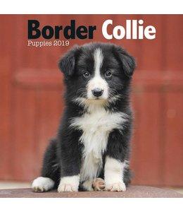 Avonside Border Collie Kalender 2019 Mini