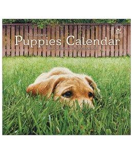 Legacy Puppies Kalender 2019