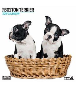 Magnet & Steel Boston Terrier Kalender 2019 Modern