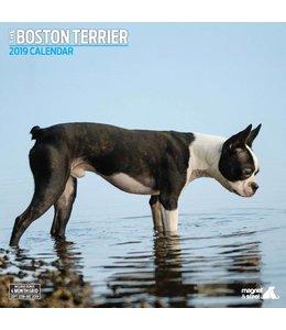 Magnet & Steel Boston Terrier Kalender 2019