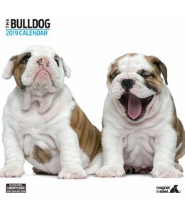 Magnet & Steel Engelse Bulldog Kalender 2019 Modern