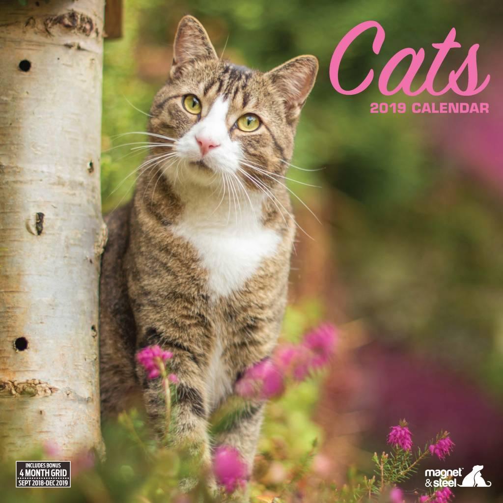 Katten Kalender 2019