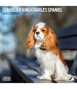 Magnet & Steel Cavalier King Charles Spaniel Kalender 2019