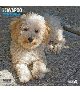 Magnet & Steel Cavapoo Kalender 2019