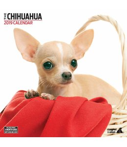 Magnet & Steel Chihuahua Kalender 2019 Modern