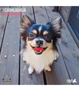 Magnet & Steel Chihuahua Kalender 2019