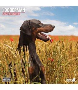 Magnet & Steel Dobermann Kalender 2019
