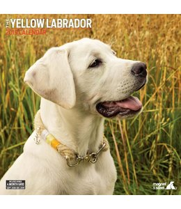 Magnet & Steel Labrador Retriever Blond Kalender 2019
