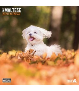 Magnet & Steel Maltezer Kalender 2019