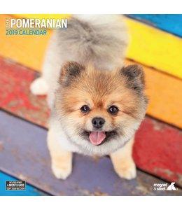 Magnet & Steel Pomeranian Kalender 2019
