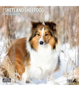 Magnet & Steel Sheltie - Shetland Sheepdog Kalender 2019
