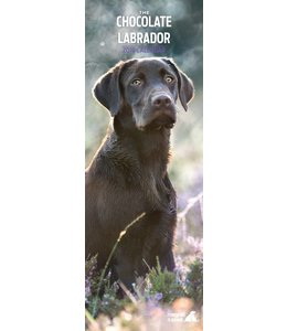 Magnet & Steel Labrador Retriever Kalender Bruin 2019 Slimline
