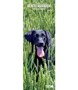 Magnet & Steel Labrador Retriever Kalender Zwart 2019 Slimline
