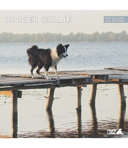 Magnet & Steel Border Collie Kalender 2019 Deluxe