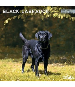 Magnet & Steel Labrador Retriever Zwart Kalender 2019 Deluxe