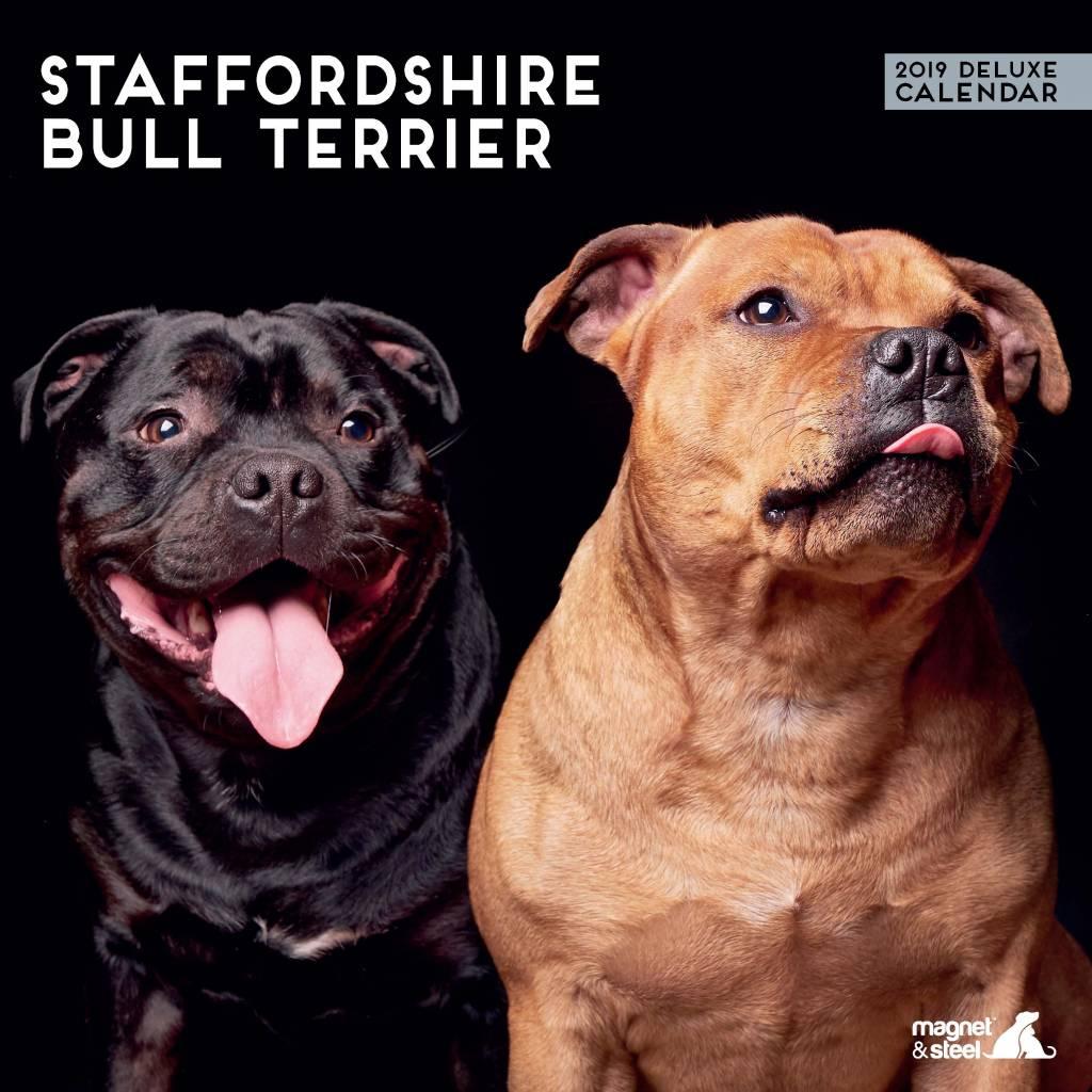 Staffordshire Bull Terrier Kalender 2019 Deluxe