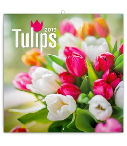 Presco Tulpen - Tulips Kalender 2019
