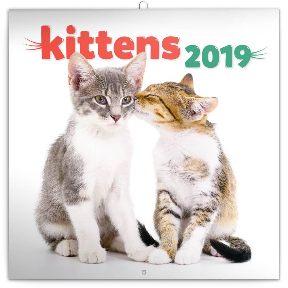 Kittens Kalender 2019 Presco