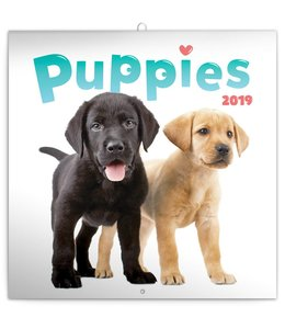 Presco Puppies Kalender 2019