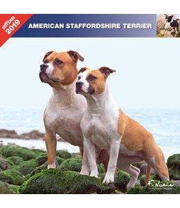 Affixe Editions American Staffordshire Terrier Kalender 2019