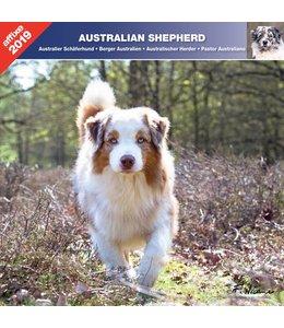 Affixe Editions Australian Shepherd Kalender 2019