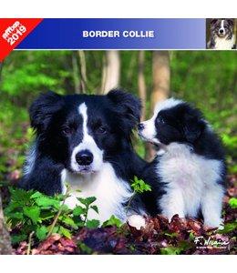 Affixe Editions Border Collie Kalender 2019