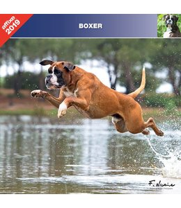 Affixe Editions Boxer Kalender 2019