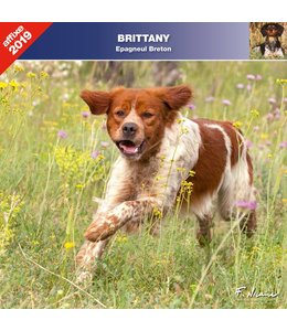 Affixe Editions Brittany Spaniel Kalender 2019