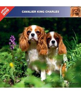 Affixe Editions Cavalier King Charles Spaniel Kalender 2019