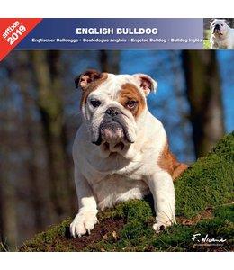 Affixe Editions Engelse Bulldog Kalender 2019