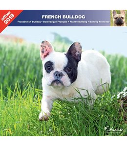 Affixe Editions Franse Bulldog Kalender 2019
