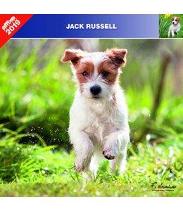 Affixe Editions Jack Russell Terrier Kalender 2019