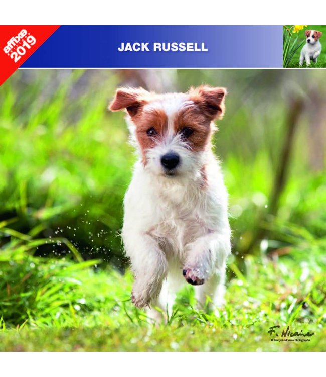 Affixe Editions Jack Russell Terrier Kalender 2019