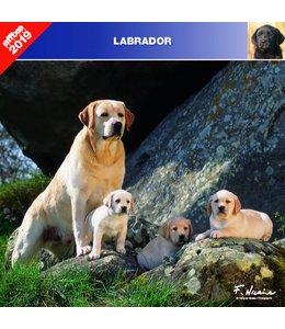 Affixe Editions Labrador Retriever Mixed Kalender 2019