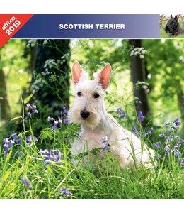 Affixe Editions Schotse Terrier Kalender 2019