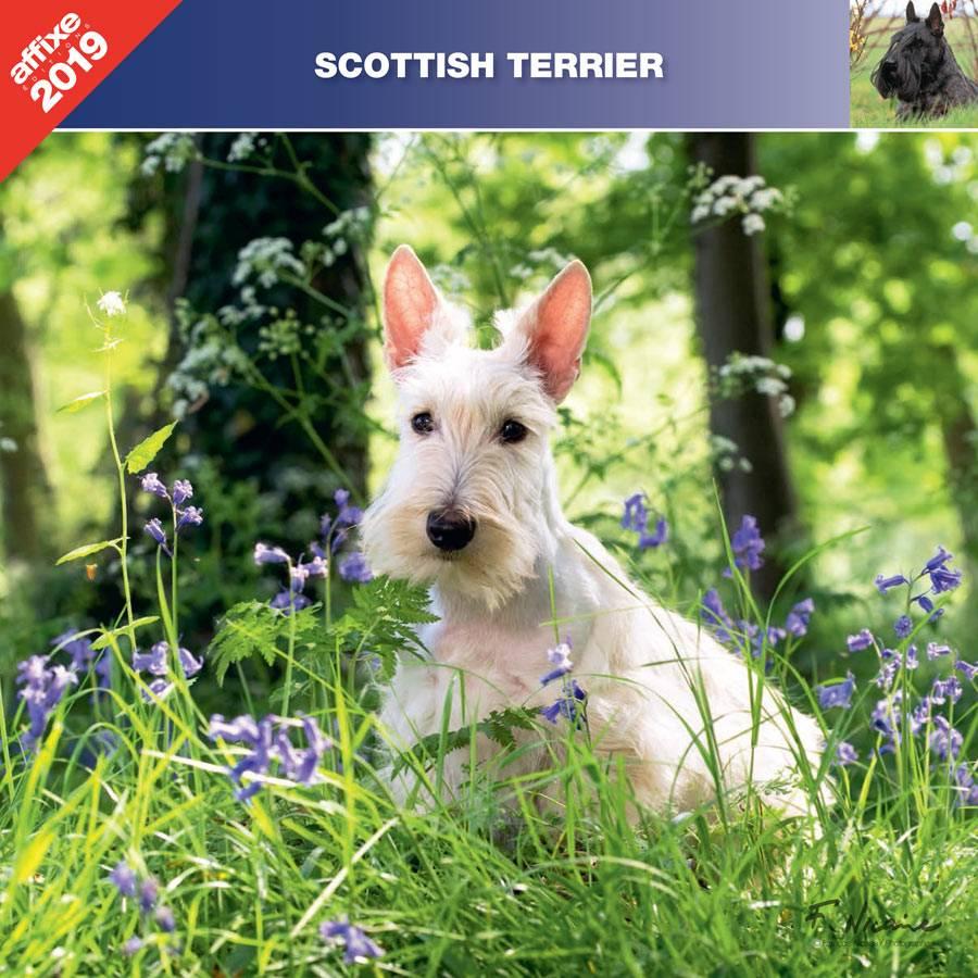Schotse Terrier Kalender 2019